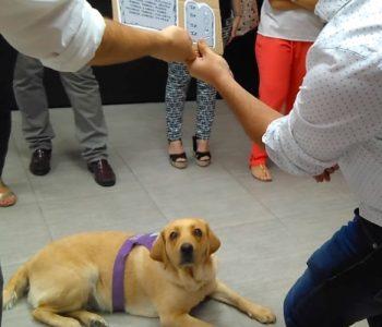 perros en el trabajo (2)
